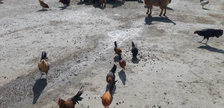 Eladó Farm Tökölön