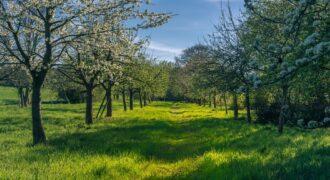 Gyümölcsfákkal díszített építési telek Őrbottyánban