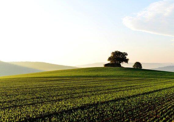 Feltételekkel termőföldön is lehetne napenergiát termelni.